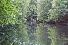 Δάσος ελών Στοκ Εικόνες