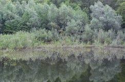 Δάσος ελών Στοκ Φωτογραφίες