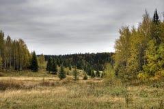 δάσος επαρχίας Στοκ Εικόνες