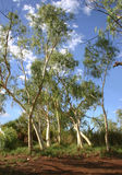 δάσος ερήμων Στοκ Εικόνες