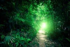 Δάσος ζουγκλών φαντασίας με τον τρόπο σηράγγων και πορειών στοκ φωτογραφία