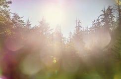 δάσος ηλιόλουστο Στοκ Φωτογραφίες