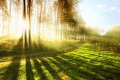 δάσος ηλιόλουστο Στοκ φωτογραφίες με δικαίωμα ελεύθερης χρήσης