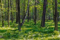 Δάσος Ιουνίου το καλοκαίρι στοκ εικόνες