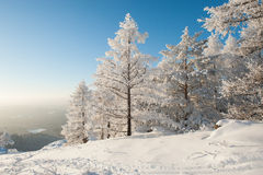 Δάσος κάτω από τη ισχυρή χιονόπτωση Στοκ Εικόνα