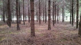 Δάσος καθρεφτών Στοκ φωτογραφία με δικαίωμα ελεύθερης χρήσης
