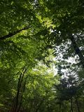 Δάσος και ήλιος στοκ εικόνες