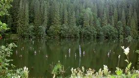 Δάσος και λίμνη απόθεμα βίντεο