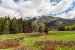 Δάσος και βουνά, Αλμπέρτα, Καναδάς στοκ φωτογραφία με δικαίωμα ελεύθερης χρήσης