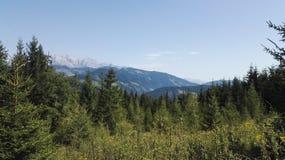 Δάσος και βουνά Στοκ εικόνα με δικαίωμα ελεύθερης χρήσης