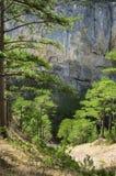 Δάσος και βράχος πεύκων Στοκ εικόνα με δικαίωμα ελεύθερης χρήσης