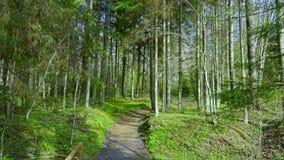 Δάσος και κολπίσκος άνοιξη απόθεμα βίντεο