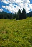 Δάσος και λιβάδι στοκ εικόνα με δικαίωμα ελεύθερης χρήσης