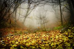 Δάσος και ομίχλη Στοκ Φωτογραφία