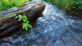 Δάσος και ποταμός