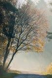Δάσος και δρόμος φθινοπώρου Στοκ Εικόνα