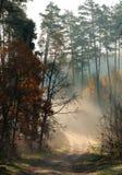 Δάσος και δρόμος φθινοπώρου Στοκ εικόνες με δικαίωμα ελεύθερης χρήσης
