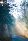Δάσος και δρόμος φθινοπώρου Στοκ φωτογραφία με δικαίωμα ελεύθερης χρήσης