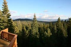 δάσος καμπινών που κοιτάζει έξω Στοκ Εικόνες