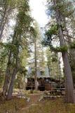 δάσος καμπινών φυσικό Στοκ Φωτογραφίες
