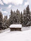 Δάσος καμπινών χειμερινών δολομιτών Στοκ Εικόνες