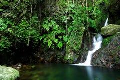δάσος καταρρακτών στοκ φωτογραφία με δικαίωμα ελεύθερης χρήσης