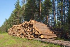 δάσος κατασκευής Στοκ φωτογραφία με δικαίωμα ελεύθερης χρήσης