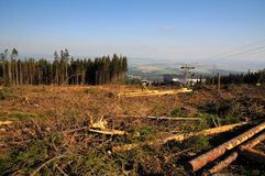 δάσος καταστροφής στοκ εικόνες
