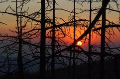 Δάσος Καλιφόρνιας στοκ εικόνες