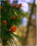 δάσος κλάδων Στοκ Εικόνα