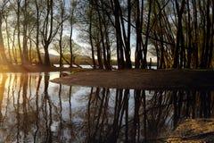 Δάσος κοιτών πλημμυρών στο ηλιοβασίλεμα με την ηλιαχτίδα και την απεικόνιση της επιφάνειας νερού Στοκ Εικόνες
