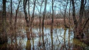 Δάσος κοιτών πλημμυρών Acarlar longoz σε Sakarya Τουρκία Στοκ Εικόνες