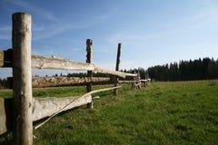 δάσος κοντά στο λιβάδι στοκ φωτογραφία με δικαίωμα ελεύθερης χρήσης