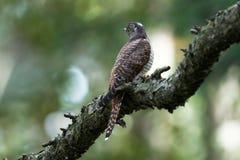 δάσος κούκων Στοκ φωτογραφίες με δικαίωμα ελεύθερης χρήσης
