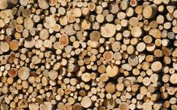 δάσος κούτσουρων ανασκόπησης Στοκ εικόνα με δικαίωμα ελεύθερης χρήσης