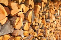 δάσος κούτσουρων στοκ φωτογραφίες με δικαίωμα ελεύθερης χρήσης