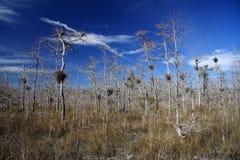 δάσος κυπαρισσιών Στοκ εικόνες με δικαίωμα ελεύθερης χρήσης