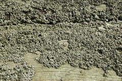 δάσος λαβίδων Στοκ Φωτογραφίες