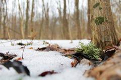 Δάσος λειχήνων την άνοιξη Στοκ Φωτογραφία