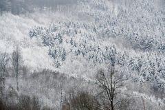 δάσος λεπτομέρειας χιο& Στοκ φωτογραφία με δικαίωμα ελεύθερης χρήσης