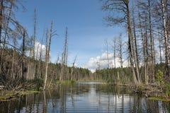 δάσος λιμνών Στοκ φωτογραφία με δικαίωμα ελεύθερης χρήσης