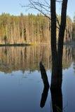 δάσος λιμνών Στοκ εικόνες με δικαίωμα ελεύθερης χρήσης