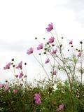 δάσος λουλουδιών Στοκ Φωτογραφία