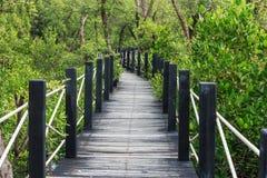 Δάσος μαγγροβίων στοκ φωτογραφίες με δικαίωμα ελεύθερης χρήσης