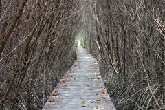 Δάσος μαγγροβίων Στοκ Φωτογραφίες