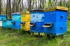 δάσος μελισσουργείων στοκ εικόνα