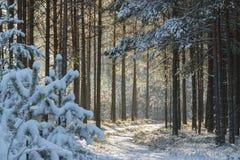 Δάσος μετά από την πτώση χιονιού Στοκ Φωτογραφία