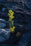 Δάσος μετά από την πυρκαγιά στοκ φωτογραφίες με δικαίωμα ελεύθερης χρήσης