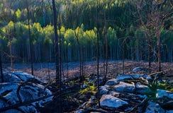 Δάσος μετά από την πυρκαγιά στοκ εικόνα
