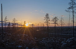 Δάσος μετά από την πυρκαγιά στοκ φωτογραφίες